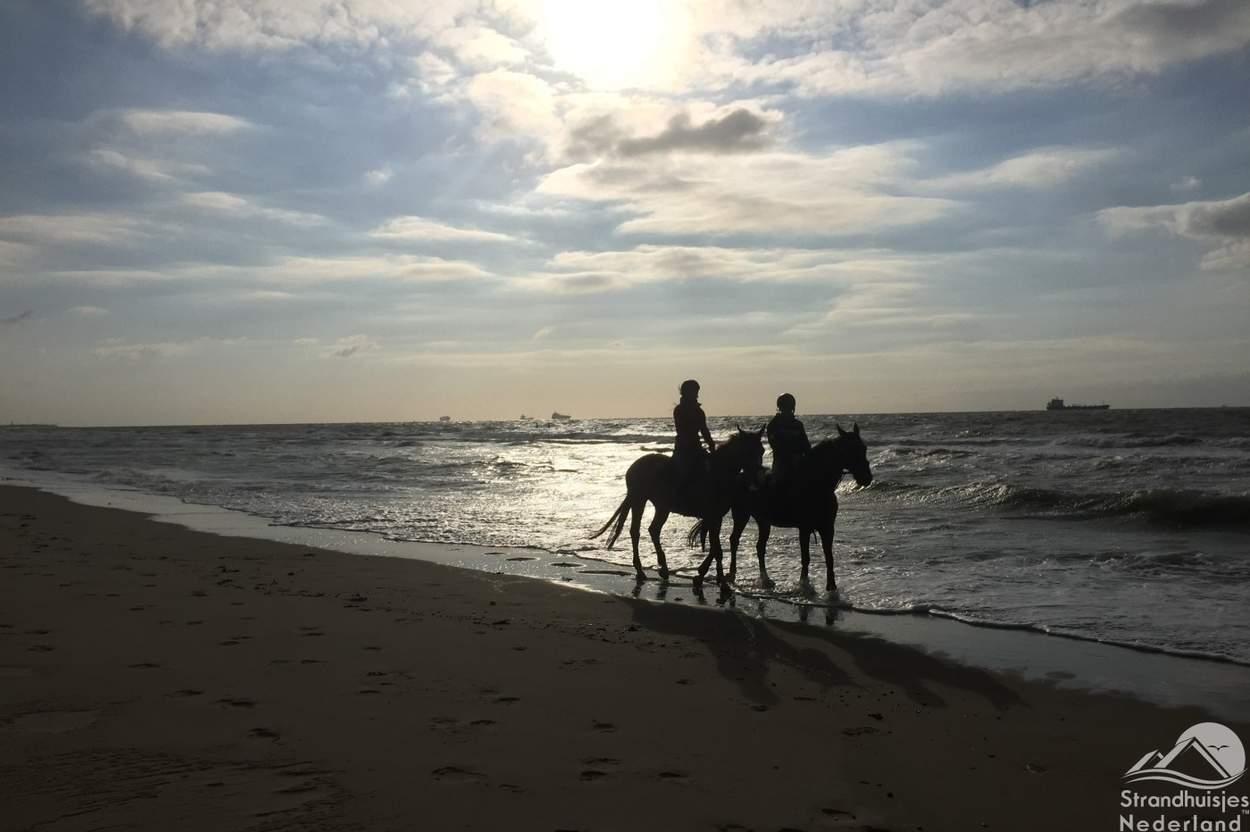 Paarden-op-het-strand-Nieuwvliet