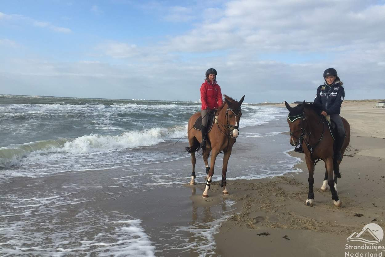 Paarden-strand-Nieuwvliet