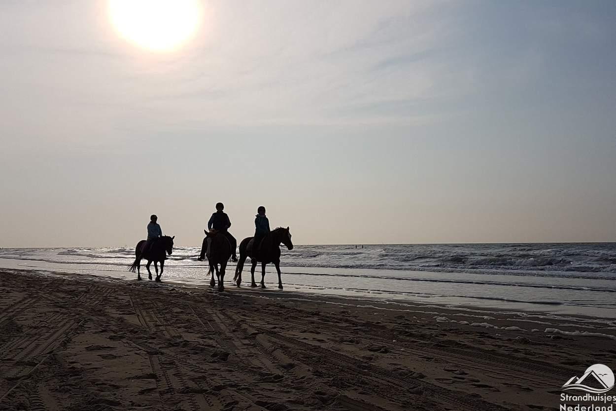 Vaak-paarden-op-het-strand-Nieuwvliet