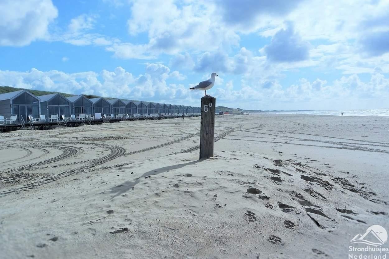 meeuw-strand-Julianadorp-aan-Zee
