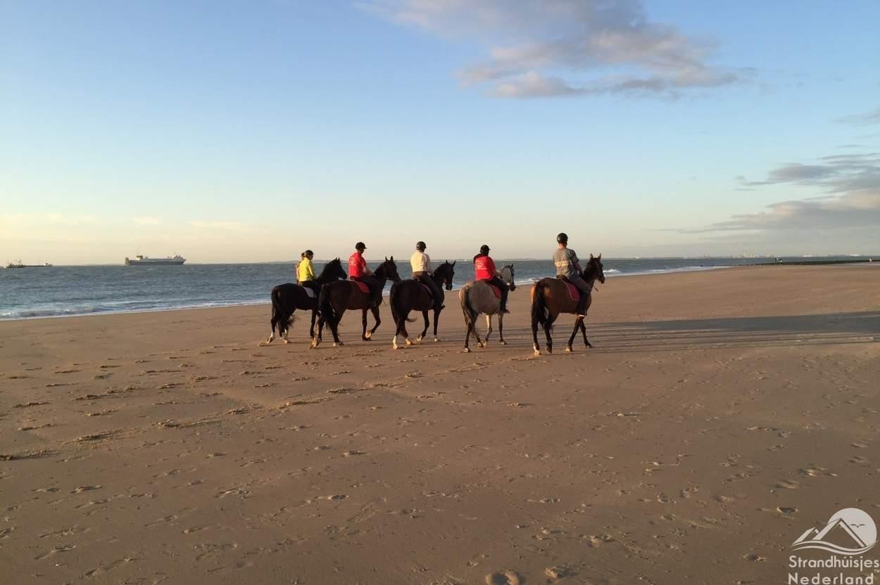 paarden-strand-Nieuwvliet-Bad