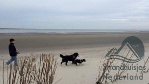 honden welkom bij de strandhuisjes