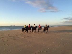 paarden strand Nieuwvliet