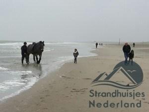 paarden op strand Hoek van Holland