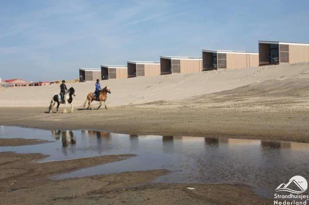 Paarden voor strandhuisjes Kijkduin
