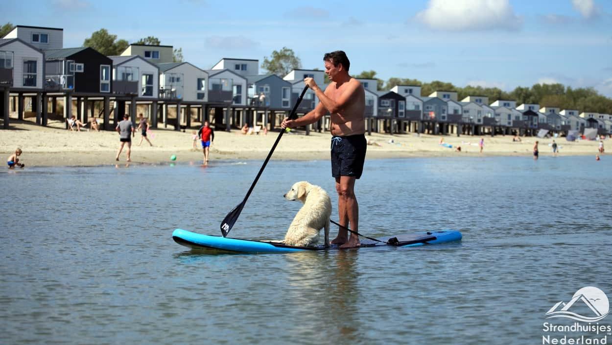 Wassersport mit dem Hund am Strand von Kamperland