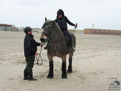 paard bij strandhuisjes Hoek van Holland