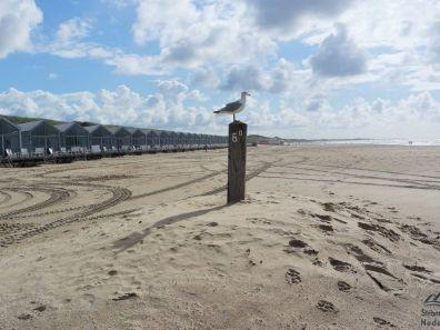 Meeuw voor de strandhuisjes